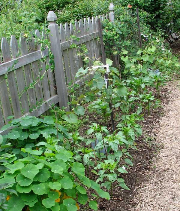 Our Edible Garden