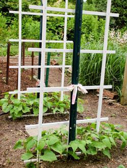 String Beans Our Edible Garden
